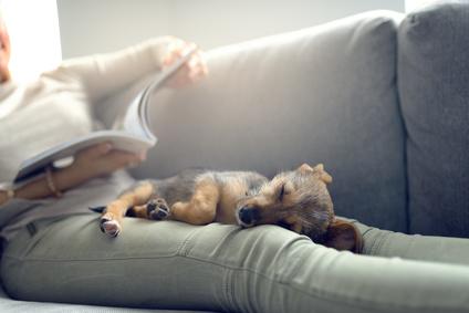 Hundebetten für kleine Hunde