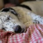 Wo stellt man ein Hundebett am besten auf?