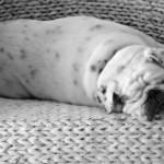 Wie reinige und pflege ich ein Hundebett richtig?