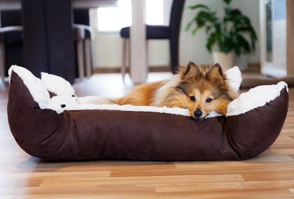 hundebett kaufen oder selber machen vorteile nachteile. Black Bedroom Furniture Sets. Home Design Ideas